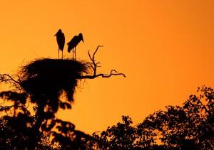 pantanal17